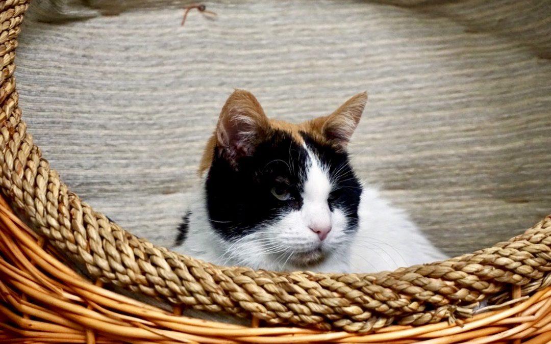 Covid-19: So vermeidest du Verhaltensprobleme deiner Katze in der Corona-Isolation