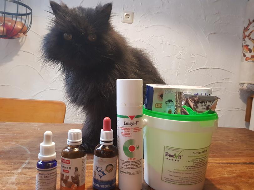 Katze mit Medikamenten