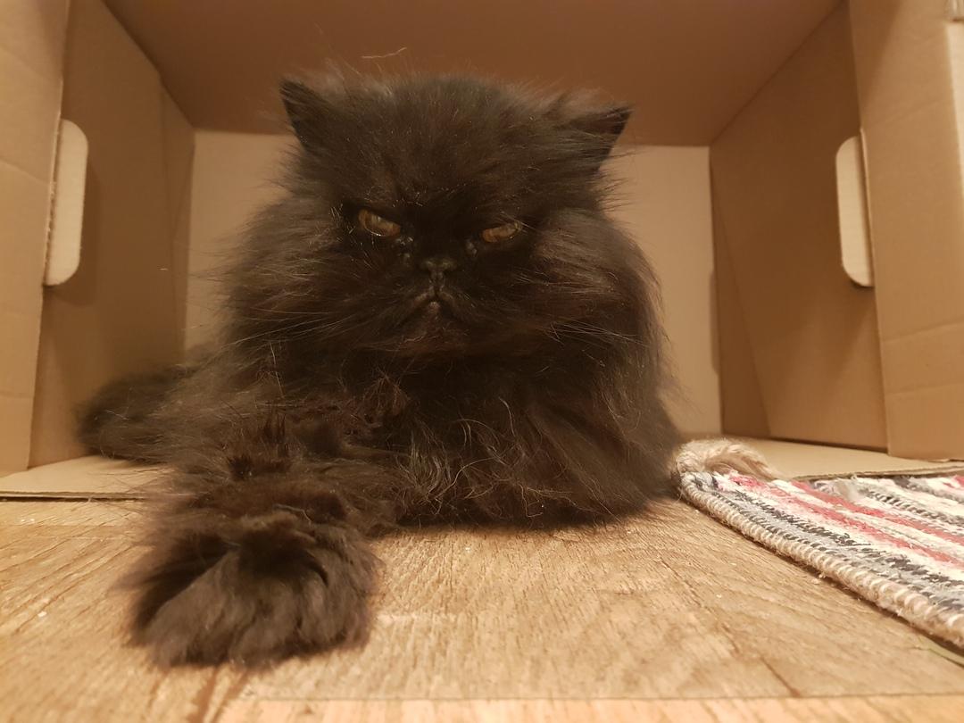 Katze liegt lässig in Karton