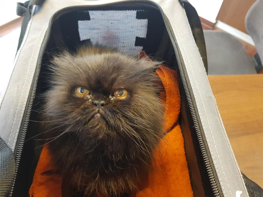 Katze in einem Transportkorb