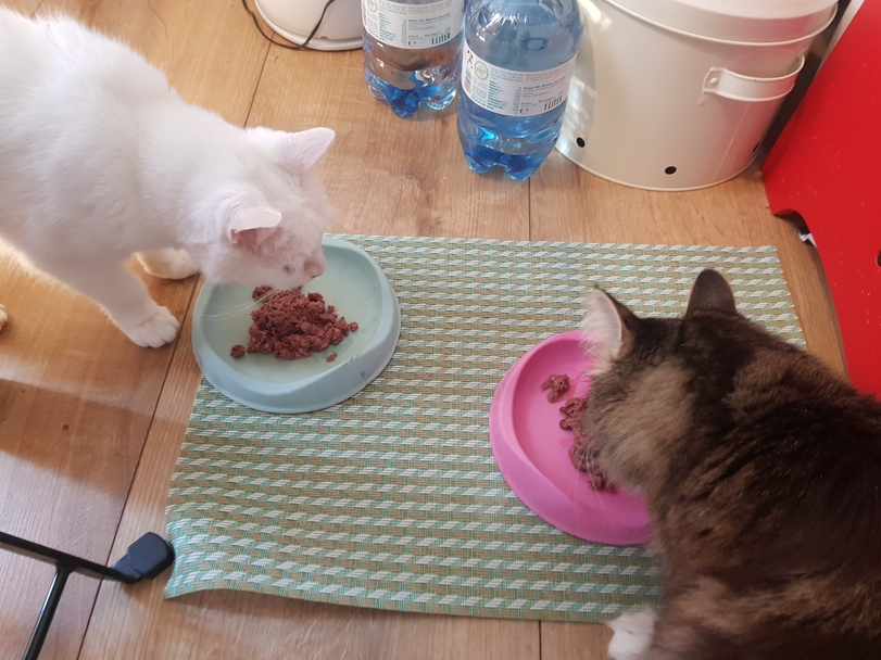 Zwei Katzen fressen nebeneinander aus ihren Näpfen