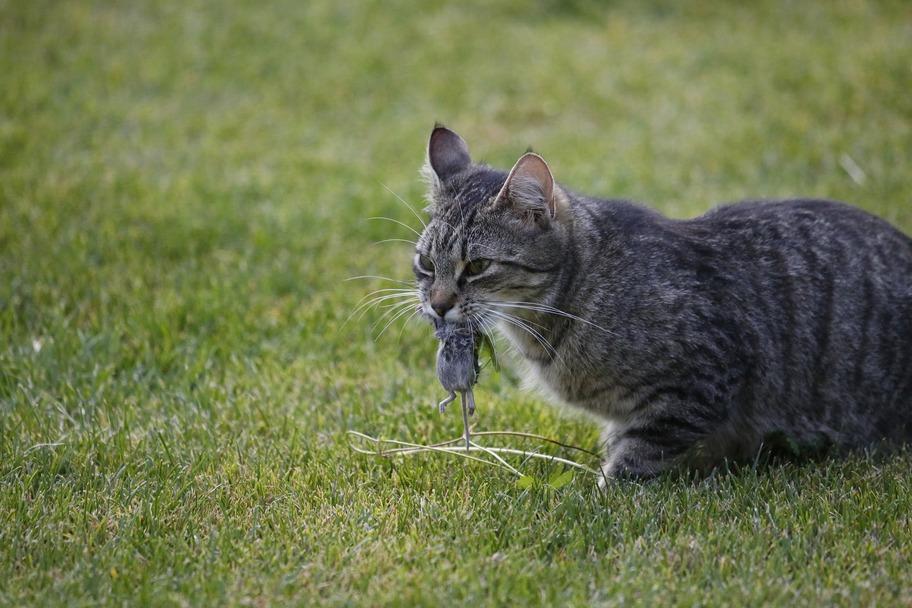 Katzenfutter-Test: Die Maus in der Dose