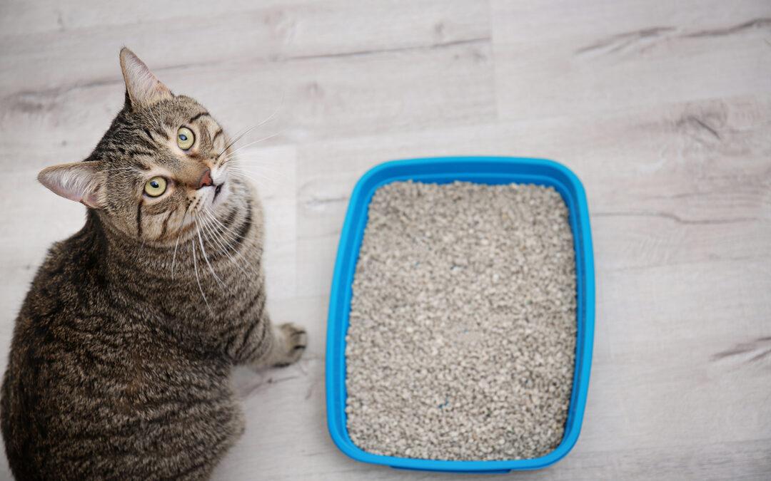 Katze sitzt vor Katzenklo und schaut dich an