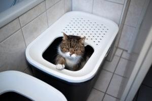 Katze sitzt in einem Katzenklo, das nur eine kleine Öffnung nach oben hat