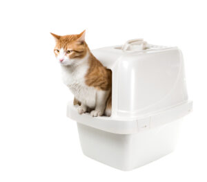 Katze in Haubenklo, sitzt halb draußen
