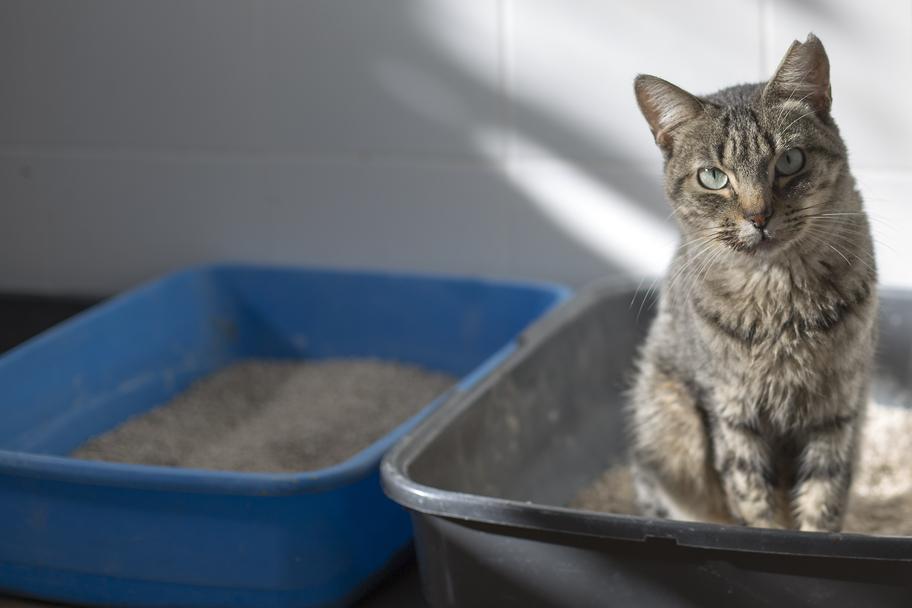Katze sitzt in einem von zwei offenen Katzenklos
