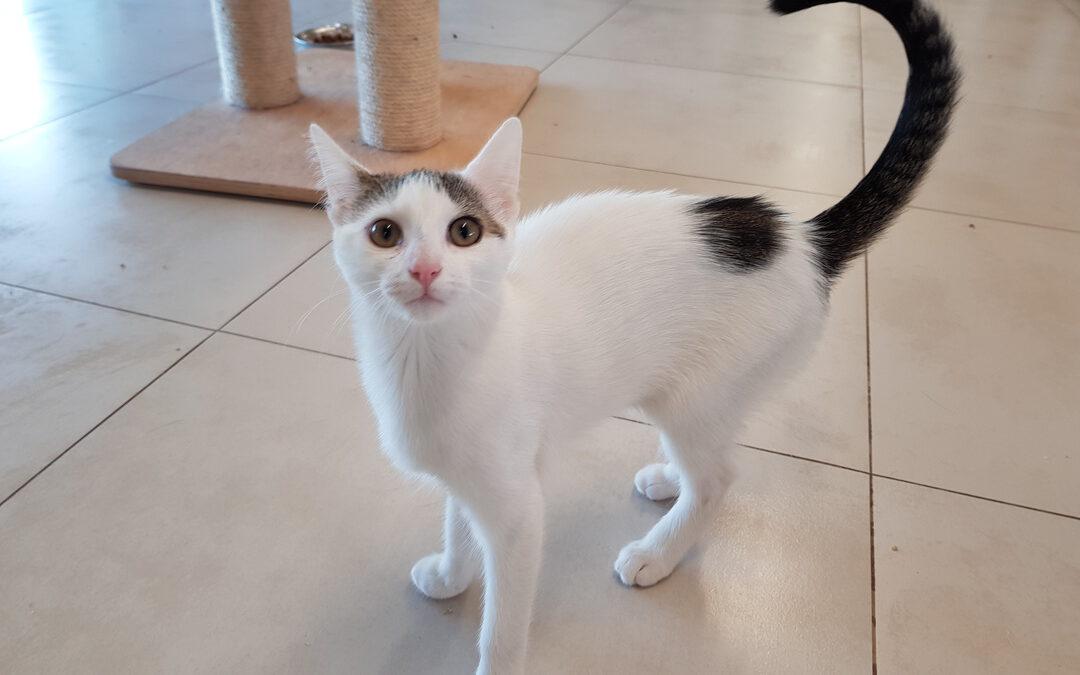 Erkennt deine Katze ihren Namen?