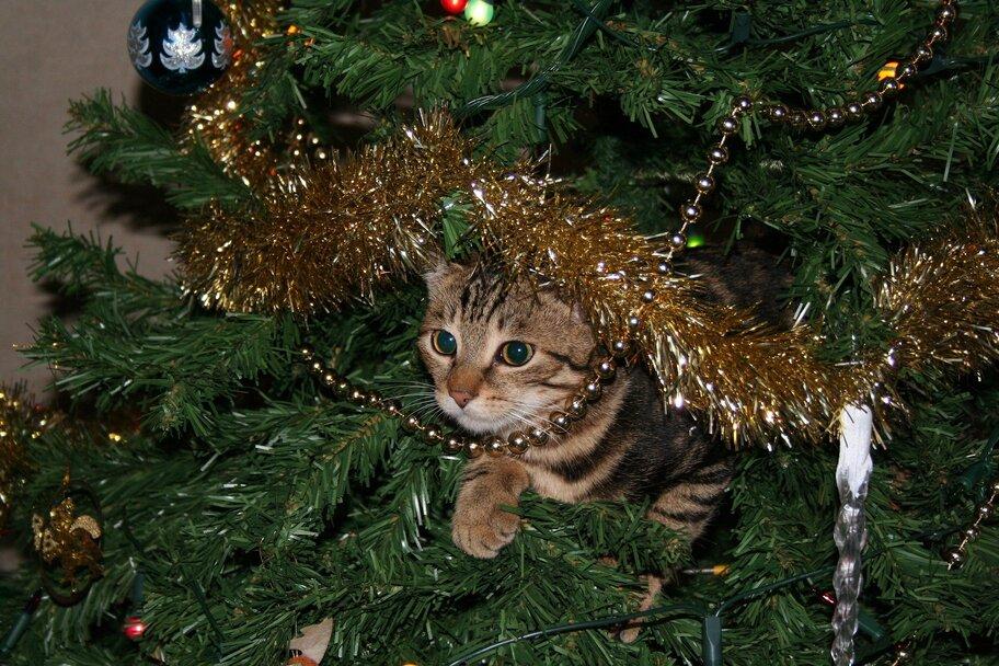 Katze klettert im Weihnachtsbaum