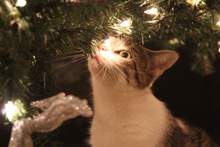 So bringst du deine Katze sicher durch die Weihnachtszeit