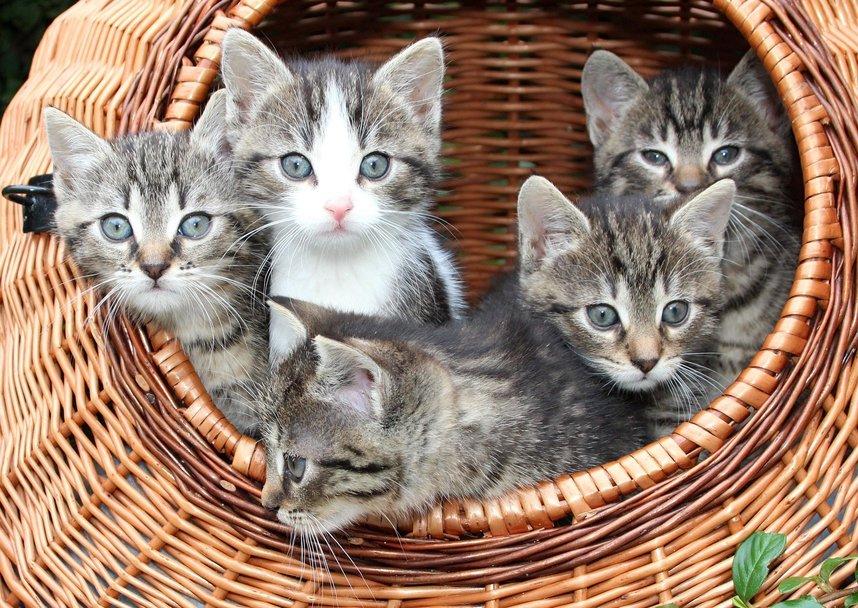 Wo bekomme ich ein Kätzchen her?