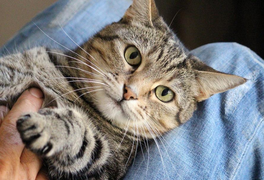Auch Katzen haben Bedürfnisse: Katze liegt auf Schoß und wird am Bauch gestreichelt