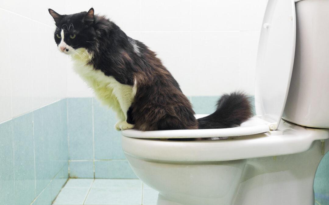 Deine Katze ans Menschenklo gewöhnen: Wie sinnvoll ist das?